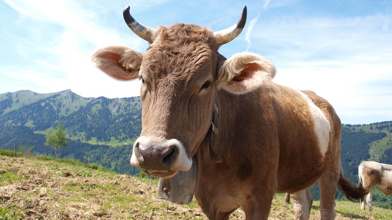 Sind Kuhglocken eine Ruhestörung?