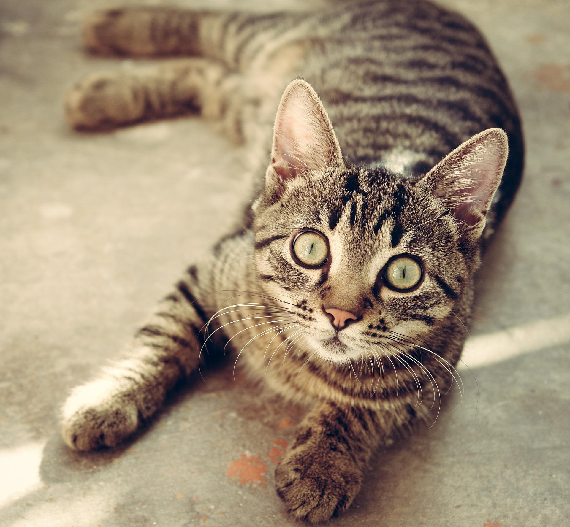 Hochwertiges Trockenfutter ist für die gesunde Ernährung von Katzen wichtig.